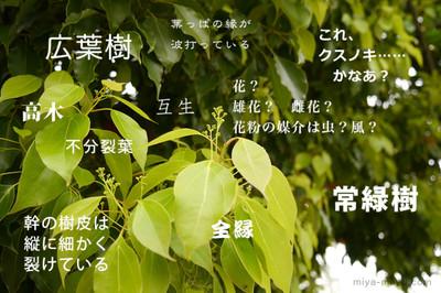 150419kusunoki2_2